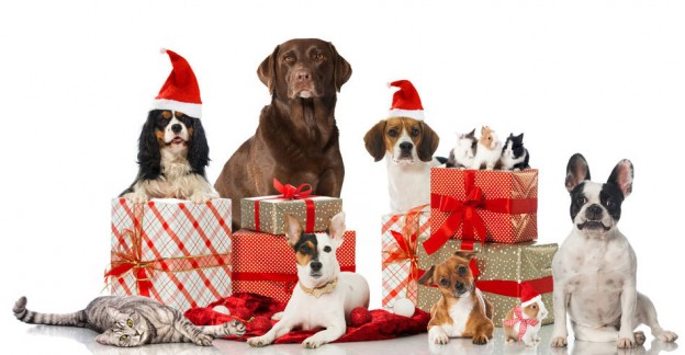 Christmas Gifts for Your Pet   PetMoneySaver
